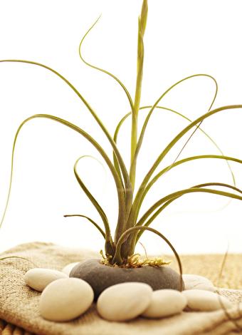 Evde bakımı en kolay 5 çiçek