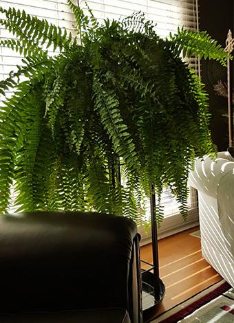Evinizde bitki bulundurmanız nedeniyle 8 sebep